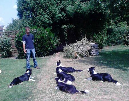 Dogcoacher-Michael-Brandt