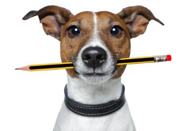 Gastautor-Hundeexperte