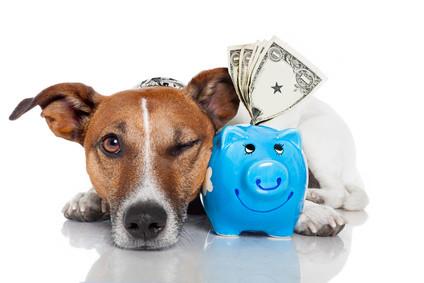 Hunde-Kosten