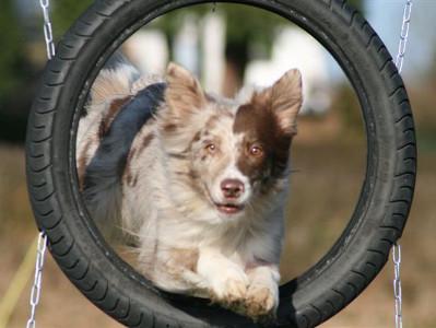 Hundeschule-Klementschitz
