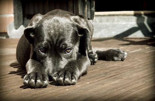 Hundezuechter-und-Welpen