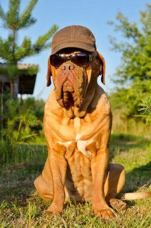 Sommerhitze beim Hund