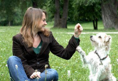 dickköpfigen hund erziehen