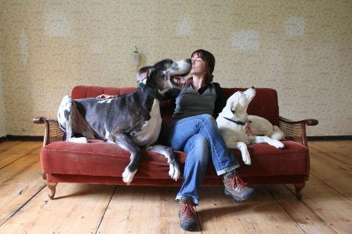 Hundecouch-tierpsychologische-Beratung - Nadine Liebert