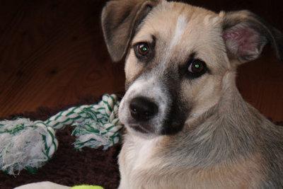 Hundeverhaltenstherapeut-Hundepsychologe-Frank-Fischer
