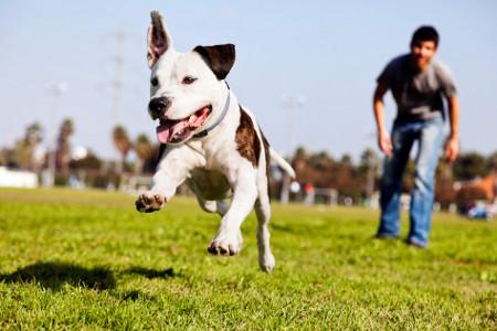 11-Gruende-fuer-einen-Hund