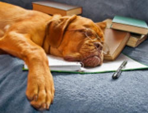 Buchtipps: Die fünf wichtigsten Werke für Hundetrainer