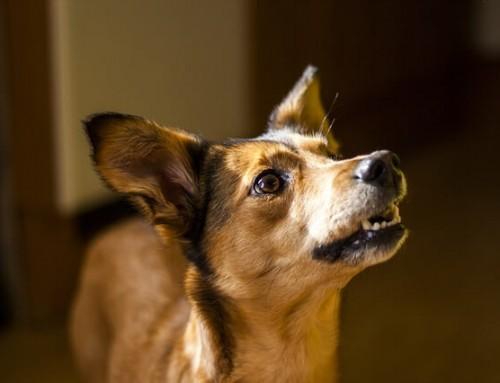 Mittelmeerkrankheiten Hund – ein Überblick – Teil 2