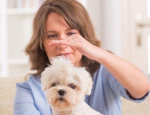 Ganzheitliches Verhaltenstraining – begleitende Therapieverfahren in Kurzform