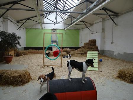 Hunde-Indoor-Halle-mit-Hundetagesstätte