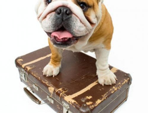 Hundepension – als sinnvolle Ergänzung für eine Hundeschule