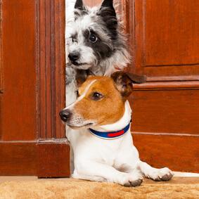 Hundesitter Verdienst