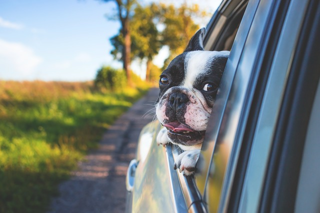 Hundetouristikmanager