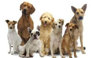 Hundezüchter