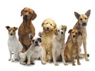 Hundetrainer Netzwerk Mobile Logo