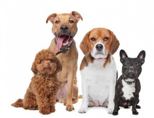 Studie: Die Hundetrainer-Typen