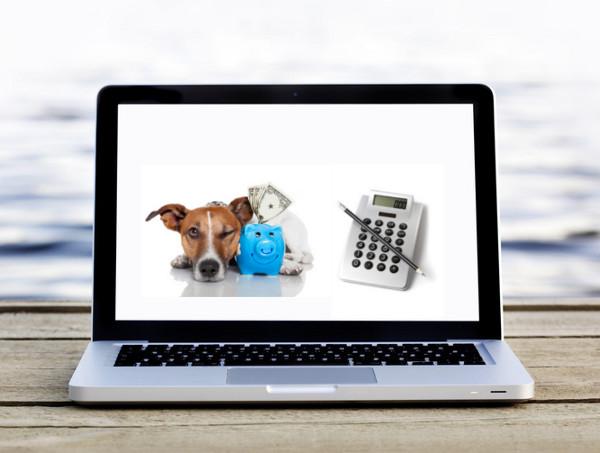 Hundetrainerausbildung-Finanzierungsmoeglichkeiten