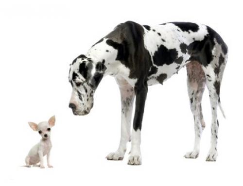 Kleine Hunde: Die häufigsten Irrtümer zu Klein- und Zwerghunden