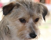 MIttelmeerkrankheiten Hund