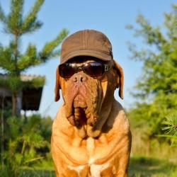 Sommerhitze-beim-Hund-B