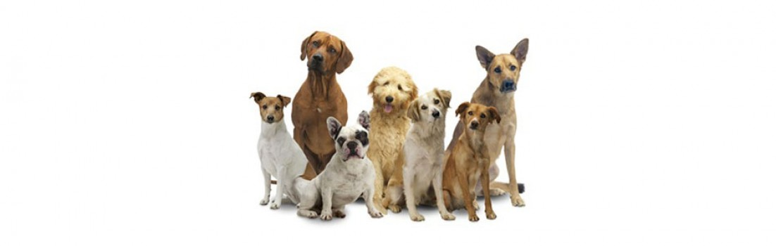 Hundetrainer-Netzwerk