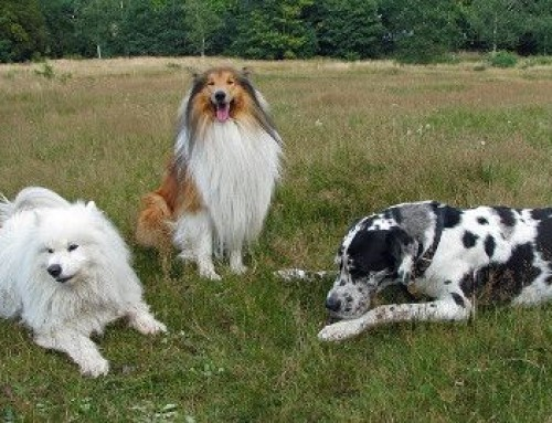 Die eigene Hundepension erfolgreich gründen