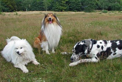 Hundepension gründen