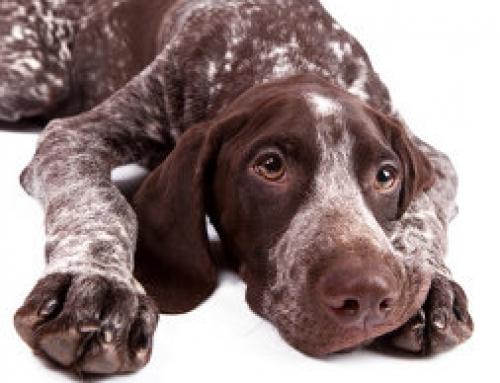 Frage zur Zulassung von Hundetrainern