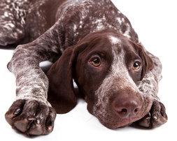 Antworten für Hundetrainer