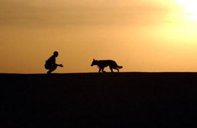 hundetrainerzertifizierung