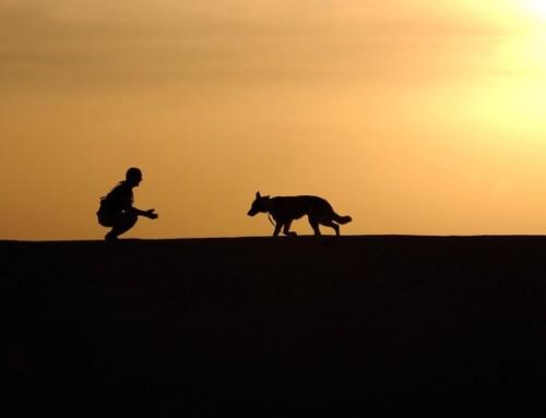 Die Hundetrainerzertifizierung – ein Erfahrungsbericht